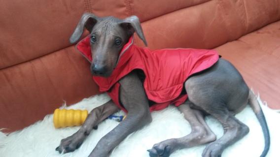 Roter Mantel Nr. 1: Weil Dante so schnell gewachsen ist, gab es sein erstes Kleidungsstück gleich in dreifacher Ausführung