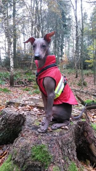 Roter Mantel Nr. 3: Der Look hat sich nicht verändert, der Hund, der drinsteckt, schon
