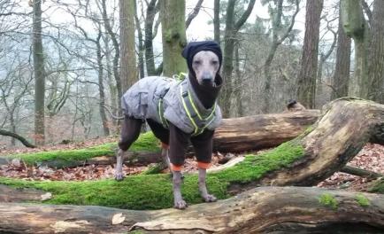 Zusammen mit Mantel und richtiger Mütze auch was für die ganz kalten Tage. Im Wald...