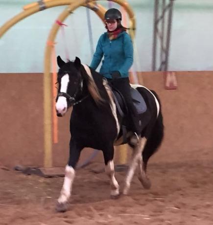 Langsam aber sicher entwickelt Donar sich zu einem richtigen Reitpferd. :D