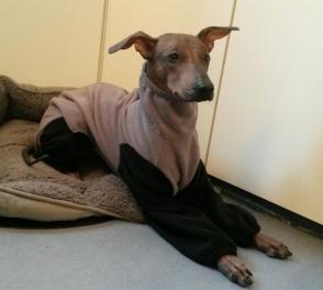 Zweiter maßgeschneiderter Anzug von Hundumschick, dieses Mal mit höherem Kragen