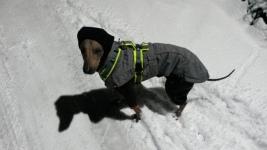 Noch ist Dante skeptisch bei diesem weißen Zeug, aber nach diesem Spaziergang hat er Schnee geliebt!