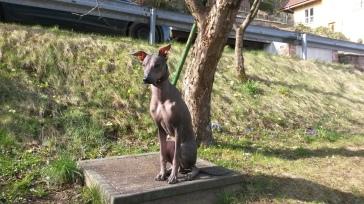 Porträt im Vorgarten. Hier ist er 10 Monate alt.