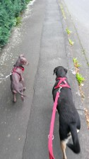 """Dante und seine """"Tante"""" Sunny. :) Sie hat ihm alles erlaubt als er klein war und inzwischen ist er größer als sie."""