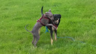 Dante und seine Freundin Sunny beim Spielen.