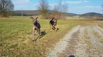 Dante und sein Hundekumpel Jerry, der zu unseren besten Freunden gehört. © Jonas Schwehn
