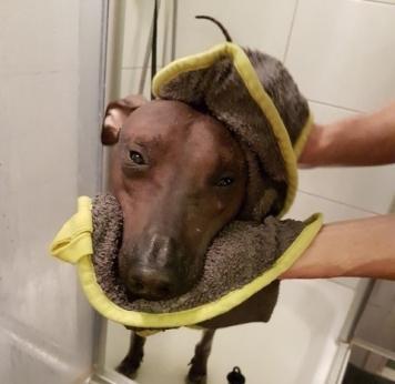 ...hilft nur noch eine Dusche